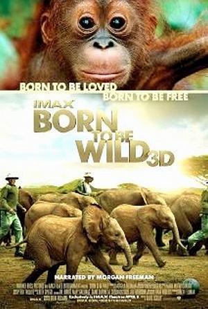 affiche du film Born to Be Wild (Né pour être libre)