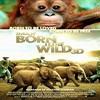 Born to be wild (Né pour être libre)