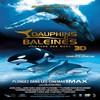 affiche Dauphins et baleines 3D, nomades des mers