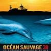 affiche Océan sauvage (Wild ocean 3d)
